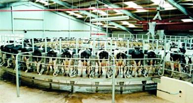 Оборудование для дойки коров и коз